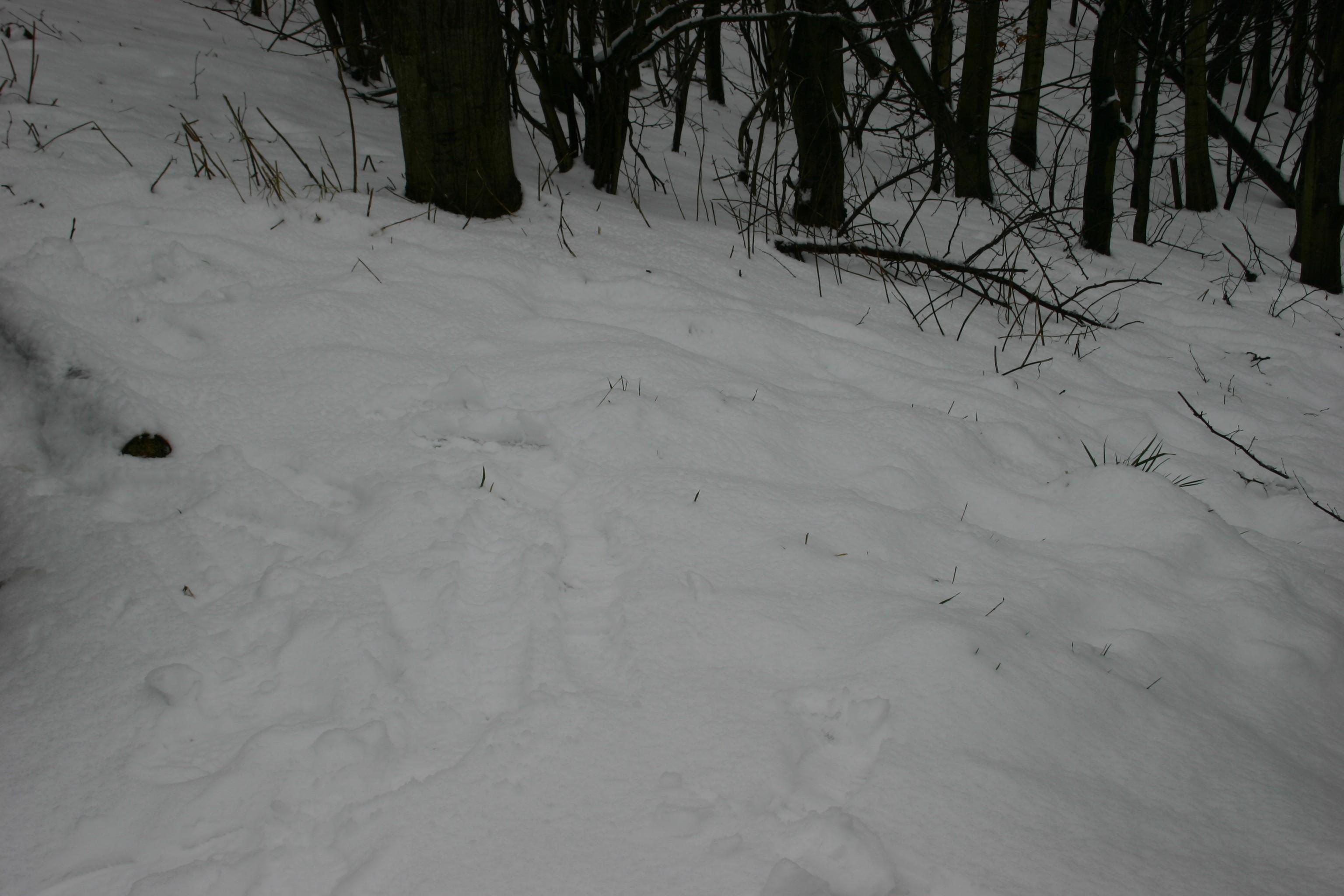 Skiliftkarussell Winterberg 019