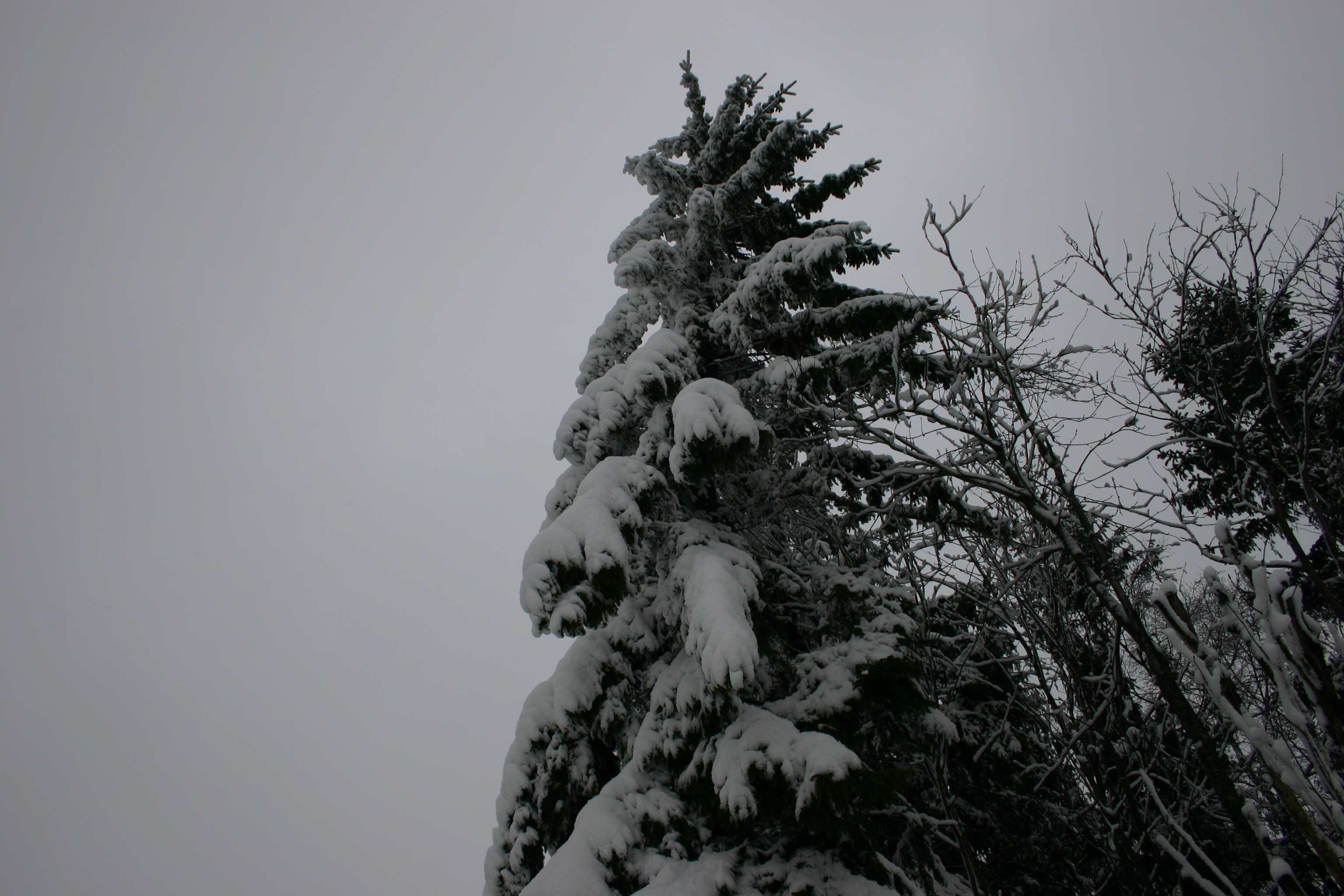 Skiliftkarussell Winterberg 093